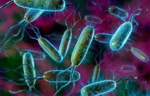 Бактерии (кишечная палочка и др.) и простейшие