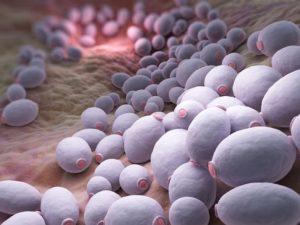 Грибы (около 70% случаев грибкового простатита связаны с инфицированием дрожжевыми грибками Candida)
