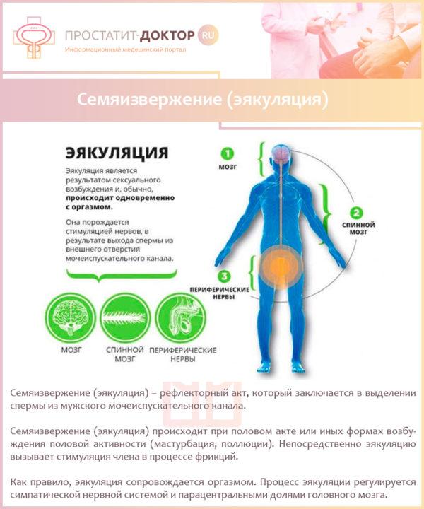 Семяизвержение (эякуляция)