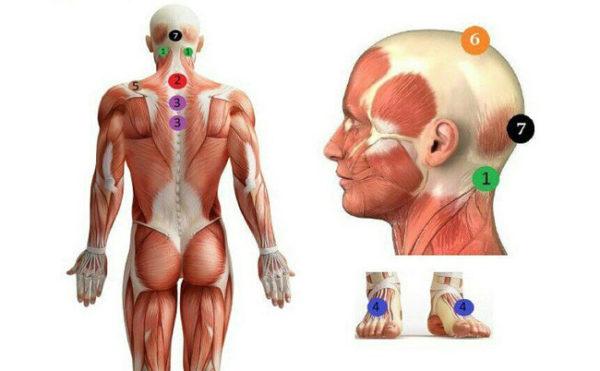 Кровопускание проводят в определенных точках на теле