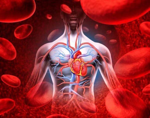 Без нормального кровообращения организм не сможет функционировать правильно
