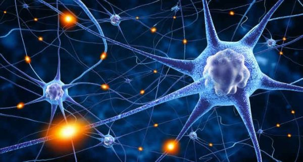 ТТГ контролирует множество процессов в организме