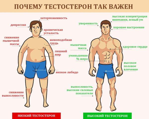 Тестостерон необходим для нормального функционирования всех систем организма