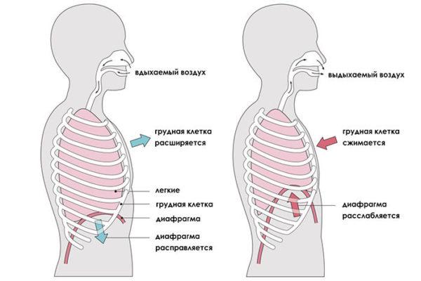 Во время выполнения упражнений важно соблюдать правильную технику дыхания