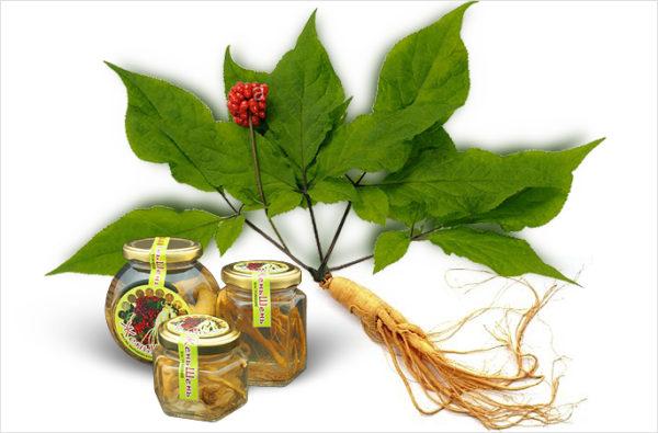 Женьшень созревает довольно долго, поэтому растение считается дорогостоящим