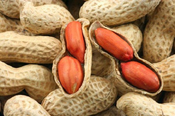 Арахис, или земляной орех
