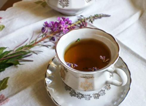 Иван-чай (копорский чай, русский чай)