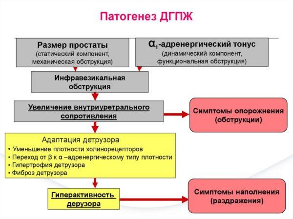 Механизм развития болезни