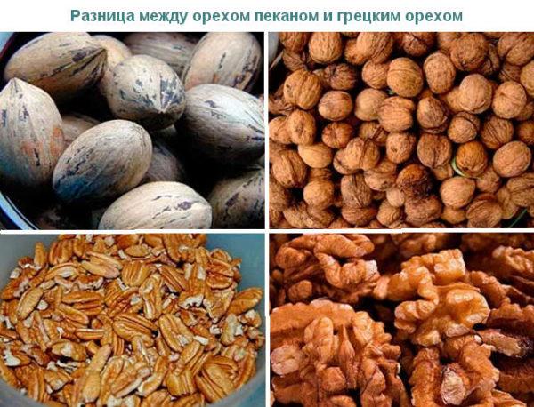 Разница между орехом пеканом и грецким орехом