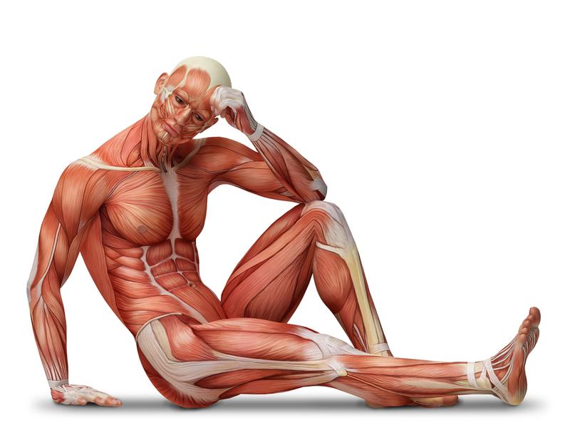 Четыре упражнения от простатита доктора евдокименко