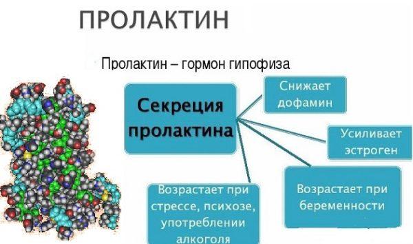 Пролактин продуцируется гипофизом