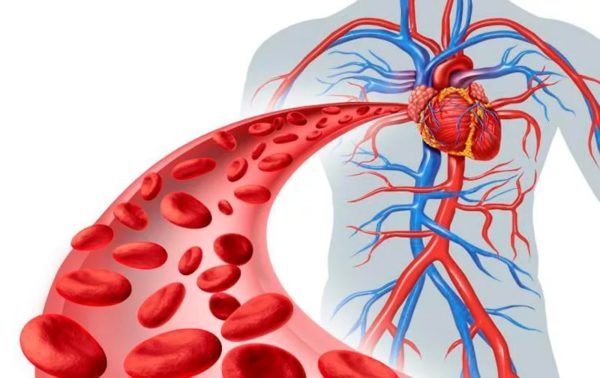 Цинк способствует улучшению кровообращения