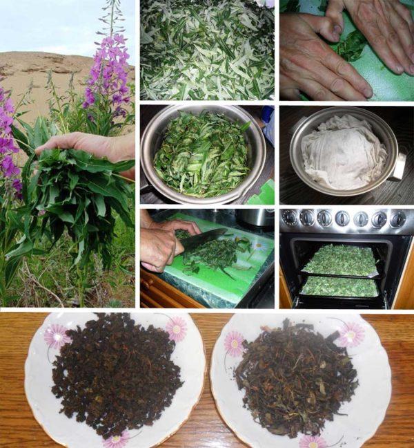 Как правильно заготовить Иван-чай