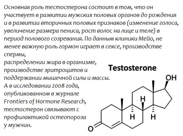Основная роль тестостерона