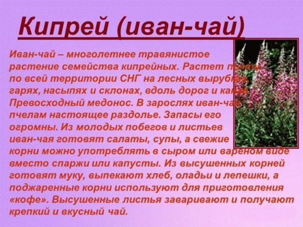 Основные сведения о растении