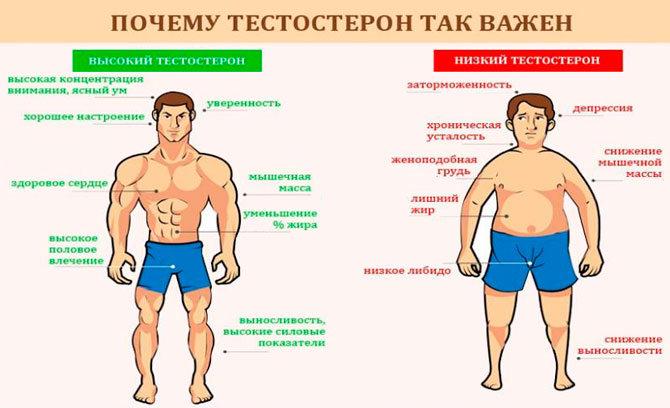 Почему так важен тестостерон